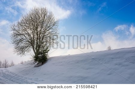 Leafless Tree On Snowy Slope