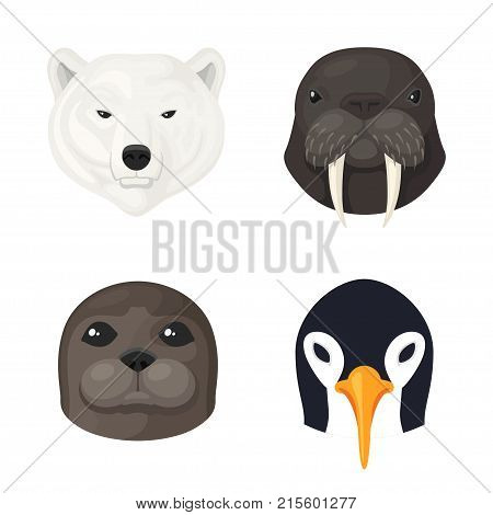 Polar animals set. Wildlife polar animals of the Arctic, seal, walrus, white bear, penguin picture. Vector flat style cartoon illustration isolated on white background