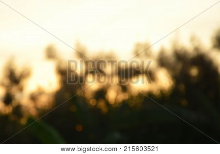 blur of grass flower field on sunset background