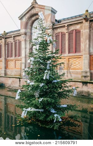 Fir tree in front of the Covered market of Colmar in the middle of the water canal of Colmar called also Little Venice