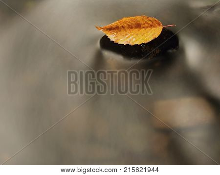 Orange Beech Leaf On Dark Slippery Stone In Cold Water.