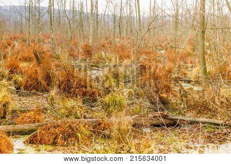 Autumn peat bog landcape. Swamp marsh wild area. Beautiful nature