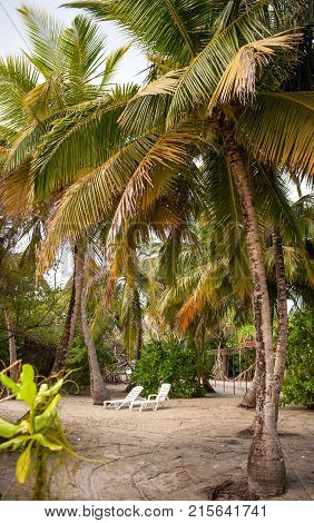 Palm leaves. lounge chairs in a Tropical Forest on the island in indian ocean.Beautiful landscape of humid tropical jungle .Picture of a tropical forest background with two beach chairs