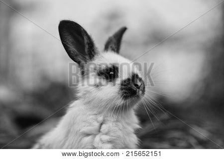 Cute Rabbit With Long Ears