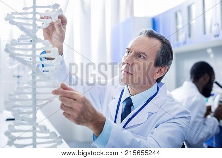Gene mutation. Smart nice male scientist looking at the DNA model and studying it while working in the lab