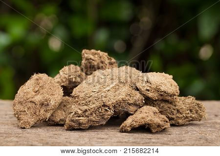 Close up dried cow dung on a wood Natural background