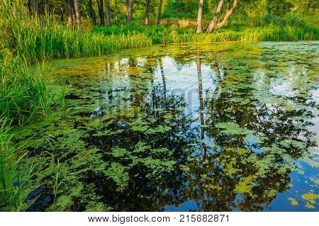 Surface of swamp water with duckweed and reflections