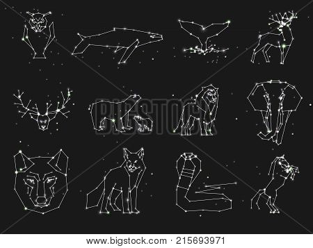 Collection of animals constellation on dark sky. Wild animals with line and stars, horoscope style. Constellation animals for cards, elephant, owl, wolf and other animals