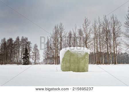The snow has covered a green roll bale of hay in the rural Finland. The winter came as a surprise to the farmers.