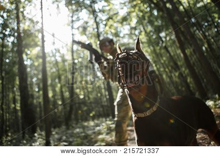 Picture of military man with dog and submachine gun in forest on reconnaissance