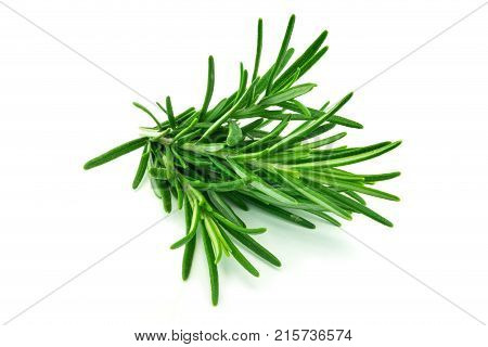 Rosemary isolated close up of herb on white background