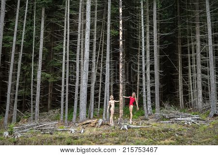 Beautiful ballerinas standing on pointes near the dry pine on the background of the coniferous forest. They wear red and beige leotards and light ballet shoes. Girls hold hands on the pine.