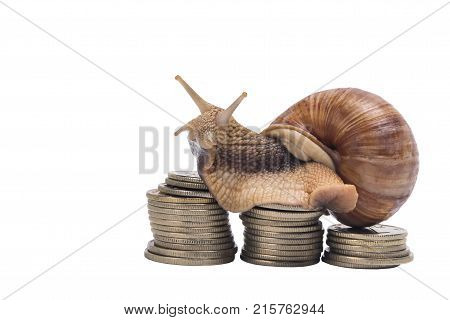snail sits on pile of coins on a white background