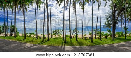 Road and palm garden near the beautiful beach