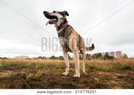 Portrait Of Mongrel Dog Standing On A Field