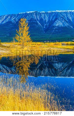 Rocky Mountains are reflected in the turquoise water of Lake Abraham. Indian Summer in the Rockies. Concept of active and ecological tourism