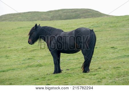 One Black pony standing on the hill