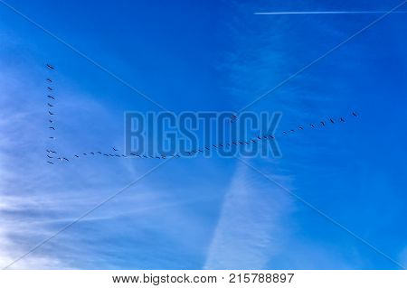 View Of The Deep Blue Evening Autumn Sky With Flock Of Flying Migrating Geese At A V Shape Formation