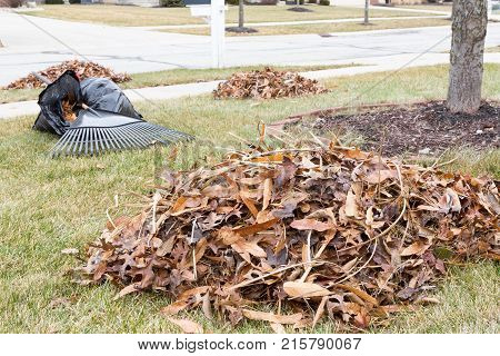 Neat Raked Pile Of Dried Brown Fall Leaves