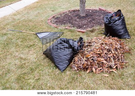 Raked Pile Of Dried Autumn Leaves In A Garden