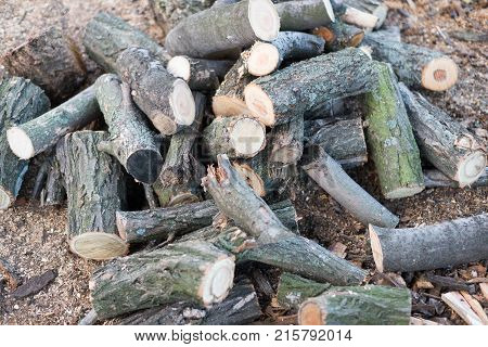 A Pile Of Firewood For The Fireplace.