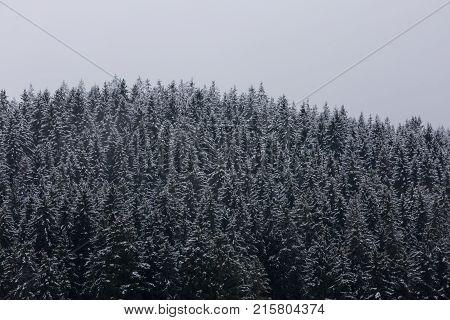 Amazing nice fogy forest in Germany Schwarzwald.