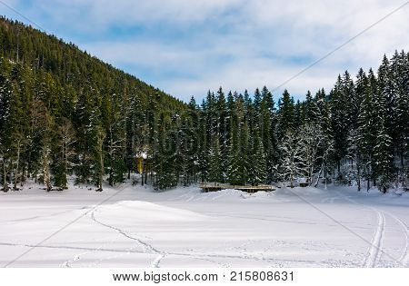 Snowy Meadow In Spruce Forest