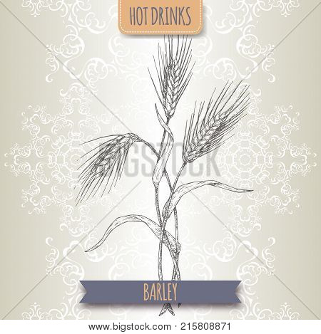 Barley aka Hordeum vulgare hand drawn sketch. Used as coffee substitute. Hot drinks collection. Great for cafe, bars, tea ads.