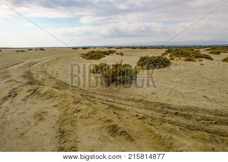 Track in the desert with tyre marks and scrubby growth. Natural and vast area.