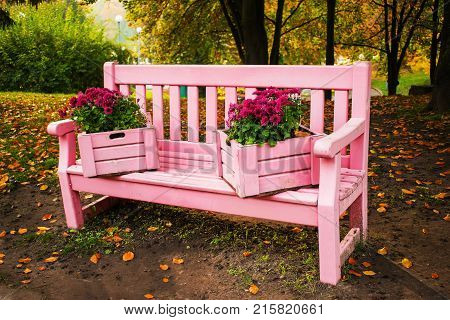 Gently pink bench decorated with boxes planted with chrysanthemums in the Autumn park. Decorative boxes with vibrant flowers standing on the pink garden bench. Garden design. Autumn flowers chrysanthemums exhibition