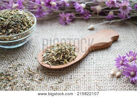 Dry beggarticks (black jack) herb in wooden spoon on sackcloth background. Bidens tripartita (beggarticks | trifid bur-marigold) herbal tea. Medicinal herb Bidens pilosa called xian feng cao in traditional Chinese medicine.