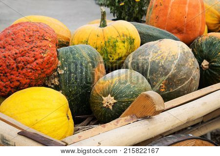 Colorful ornamental pumpkins and gourds in wooden cart in open market in the street. Different autumn orange yellow and green pumpkins and gourds in a decorative cart. Holiday decoration. Seasonal Assortment