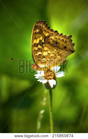 View of butterfly sitting on a white grass flower
