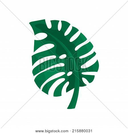Green split leaf of philodendron vector Illustration isolated on a white background