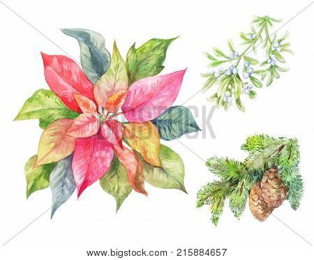 Set of Cristmas plants. Poinsettia fir branch viscum. Winter illustration isolated on white.