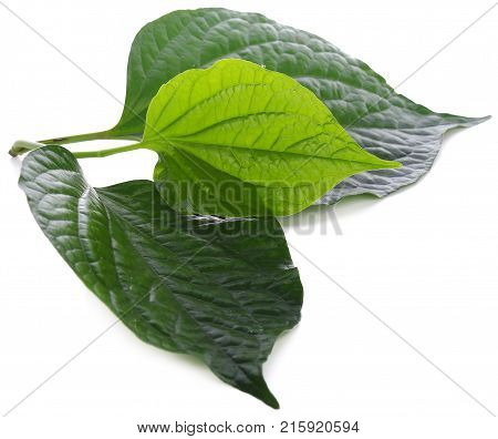 Piper sarmentosum isolated on white background leafbush, wildbetal, green, leaf, herb, fresh, nature, pattern
