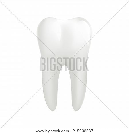 White molar tooth isolated on white background. Graphic design element for dentist advertisement, tooth paste poster, dental clinic flyer. Realistic drawing of human tooth. Vector illustration.