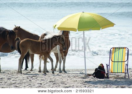 Horses on the beach under umbrella