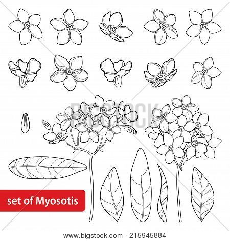 Vector set with outline Forget me not or Myosotis flower, bud, leaves and bunch in black isolated on white background. Wild plant Forget me not in contour style for spring design and coloring book.