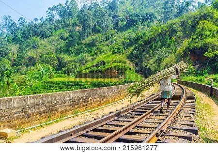 The local farmer goes along the rails of Nine Arch Bridge carrying the armful of long branches for making the fence Demodara Ella Sri Lanka.