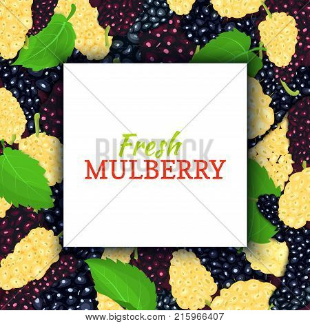 Square white label on mulberry background. Vector card illustration. Mulberries fruit and leaves for packaging design food juice, jam, ice cream, smoothies, detox, cosmetics, tea.