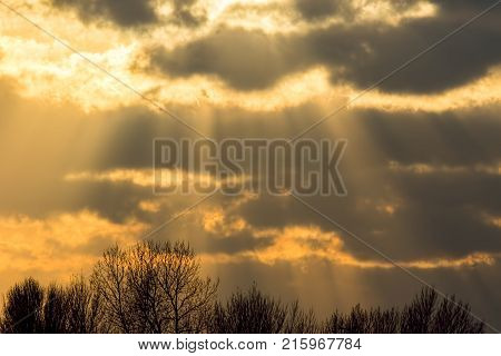 Sunset sky background image. Orange sunlight crepuscular rays through cloud. Winter tree top border at bottom edge.