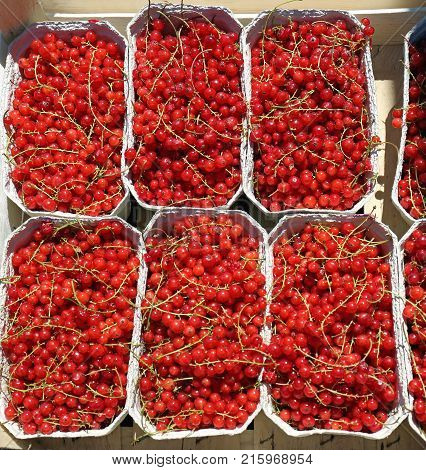 Fresh Berry Fruits Redcurrant in Trays For Sale