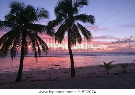 Palms at Sunset on a Tropical Island