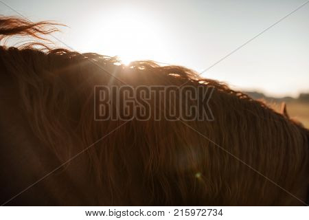 Mane horse close up in the sunlight