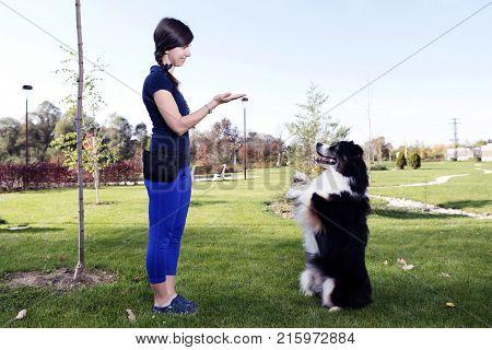 Australian Shepherd Training Park Professional Dog Handler