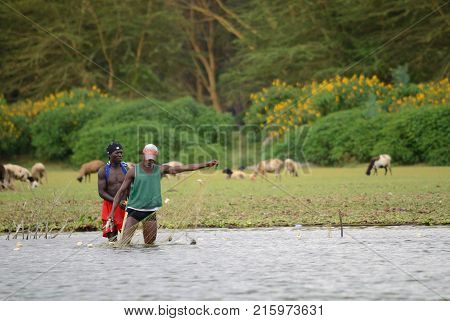 JINJA UGANDA - CIRCA OCT 2017: Daily life in Jinja. Young people are doing their daily life jobs at the riverside. The Nile Jinja. Two fisherman with net fish near Africa river.