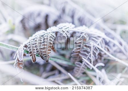 Macro Closeup Of Frost Ice Crystals On Orange Autumn Leaves, Grass In Morning On Ground