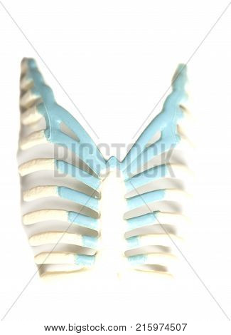 Human rib cage isolated on white  background .