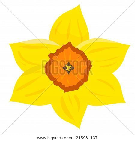 Vector illustration: daffodil known as daffadowndilly narcissus or jonquil. Heraldic flower as the seal of Wales. Daffodil as a symbol of a the feast day of Saint David the patron saint of Wales.